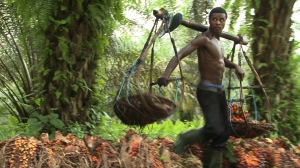 Palmoil, Cameroon