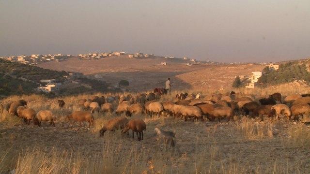 jordansyrianrefugee